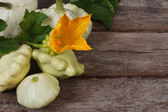 Ripe pattypan squash vegetables with yellow flowers and leaves — Stock Photo