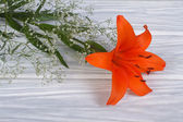 Orange lily flower framed by gypsophila on a wooden table — Stock Photo