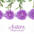 Beautiful card with floral patterns of blue asters isolated — Stock Photo