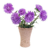 The beautiful blue aster flowers in a vase isolated on white — Stock Photo