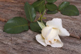 Beautiful white rose on an old wooden table — Stock Photo