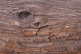 Texture Pine bark of a tree. background. — Stock Photo