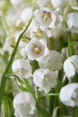 Floral background from lilies of the valley flowers. vertical — Stock Photo