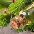 Fir aromatic oil in a glass bottle. macro horizontal — Stock Photo #46394263