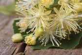 žluté květy lípa makra. horizontální — Stock fotografie