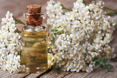 Tincture of yarrow in the bottle close-up horizontal — Stock Photo