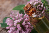 Clover extract in a bottle nd flowers macro horizontal — Stock fotografie