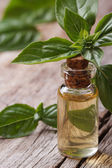 Resh oil with basil close-up in a bottle vertical. — Stock Photo