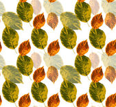 Pattern with leaves — Stock Vector