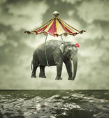 Fanciful elephant — Stock Photo