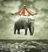 Fantasievolle olifant — Stockfoto