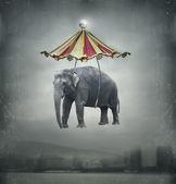 Fantasy elephant — Stock Photo