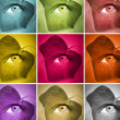 Series of colors - Stock Photo