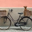Stock Photo: Bicycle and Chihuahua
