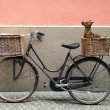 Bicycle and Chihuahua — Stock Photo