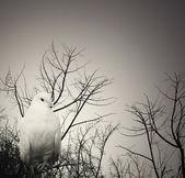 Poetical white dove — Stock Photo