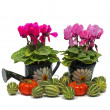 Green pots with flowers — Stock Photo