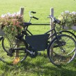 Old bike with flowers — Stok Fotoğraf #13901539