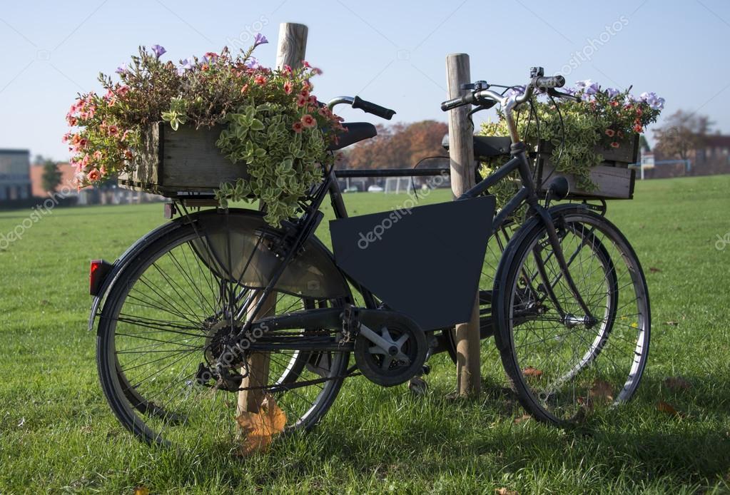旧自行车携带鲜花 chamillewhite  用鲜花的旧复古自行车 ipolstock