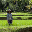 Woman working in rice fields — Stock Photo