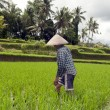 Woman working in rice fields — Stock Photo #16637045