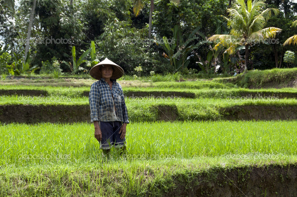 Woman working in rice fields on Bali — Stock Photo #16637007