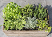 Wooden container with fresh herbs — Stock Photo