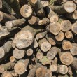 Stock Photo: Wooden logs