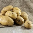 Stock Photo: Patatoes on jute background
