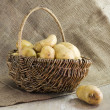 Basket with potatoes — Stock Photo