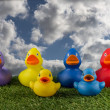 Toy ducks and blue sky — Stock Photo