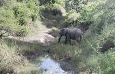 Big elephant crossing the river — Stock Photo