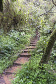 Stairs into the forest — Stock Photo