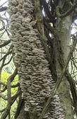Tree full of mushrooms and fungi — Stock Photo