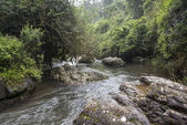 Big rocks in  river in green forest jungle area — Stock Photo