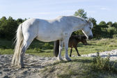 White and brown horse — Stock Photo