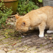 Cat vomiting — Stock Photo