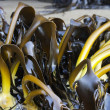Bull kelp — Stock Photo