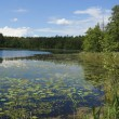 Stockfoto: Wood lake.