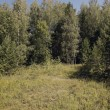 Meadow on the brink of wood. - Stock Photo