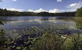 Lago de madera. — Foto de Stock