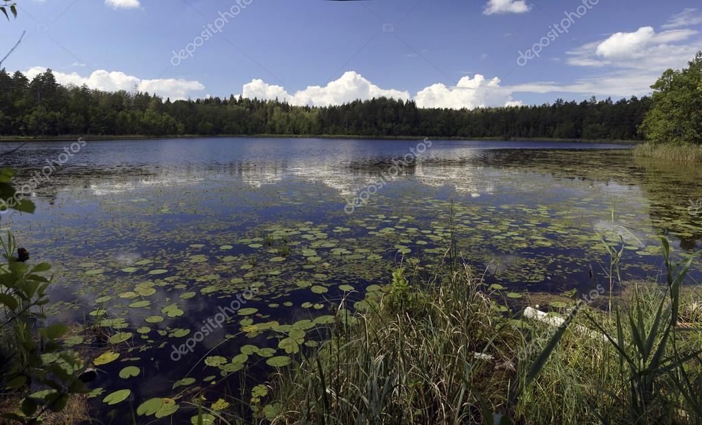 Wood lake.  Stock Photo #13589700