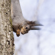 Squirrel. — Stock Photo #24846371