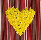 Daffodils heart — Stock Photo