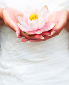Water lily in flower in hands — Stock Photo