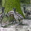 Stock Photo: Emu chicks