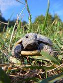 ребенок черепаха — Стоковое фото
