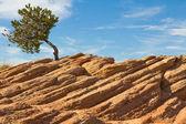 Osamělý strom — Stock fotografie