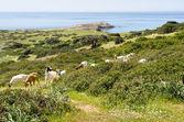 Sardinia, Capo Pecora — Stock Photo