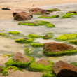 Rocks and algae — Stock Photo